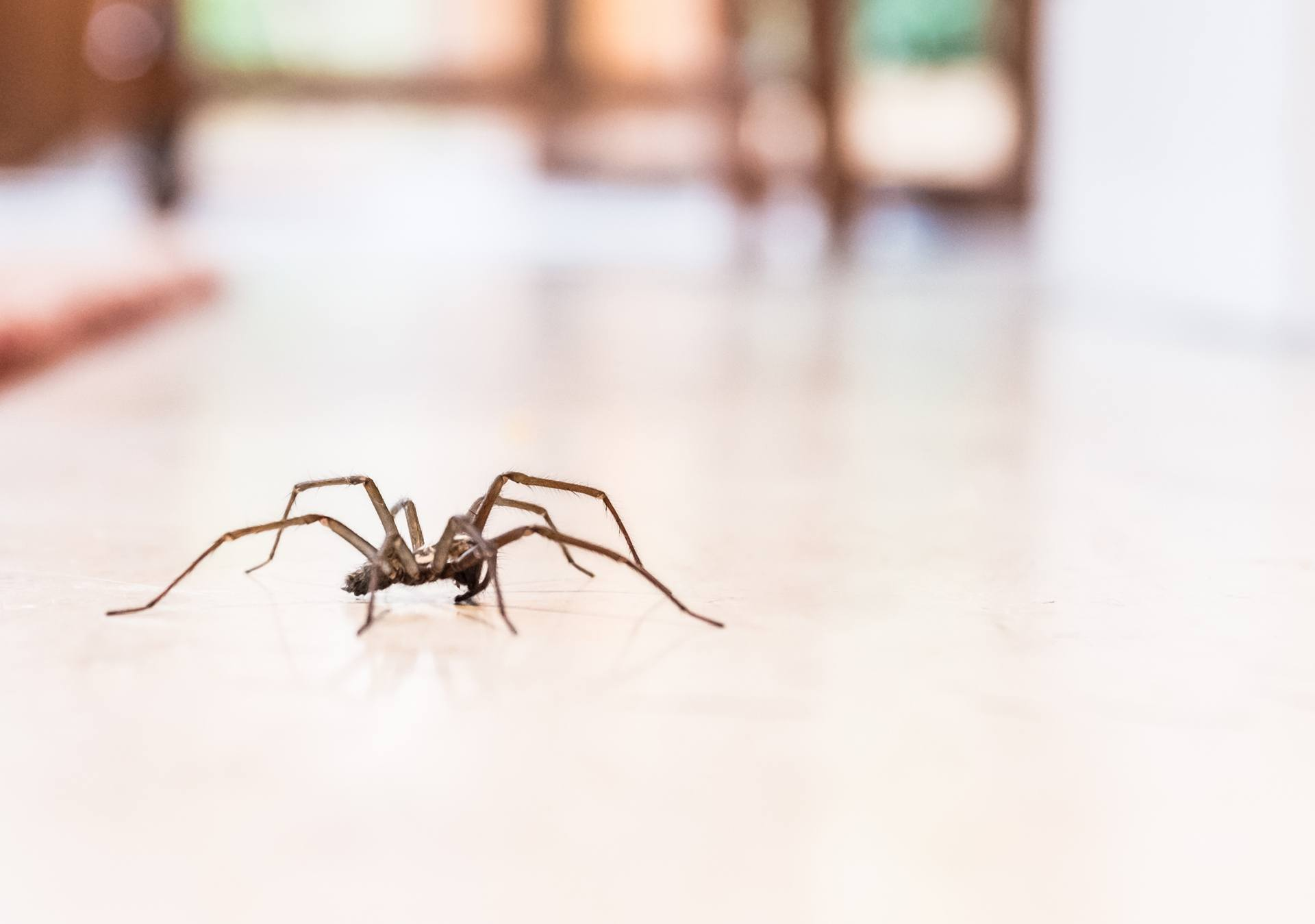 brown spider crawling across a white tile floor