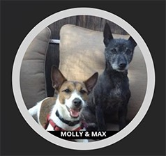 Molly and Max, our Certified Bed Bug Detection Dogs